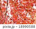 秋 紅葉 光の写真 18990588