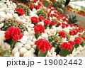 赤 赤い 赤色の写真 19002442
