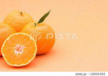 マンダリンオレンジ:mandarin orange 19003462