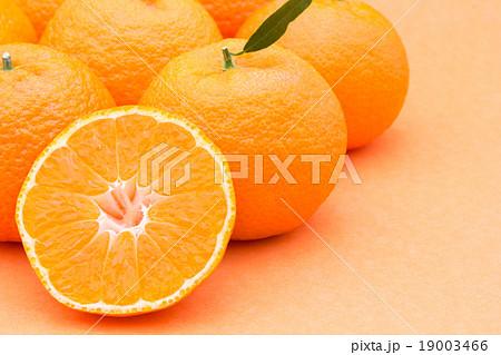 マンダリンオレンジ:mandarin orange 19003466