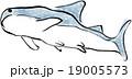 ジンベイザメ 19005573