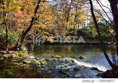 京極ふきだし公園の紅葉 19009857