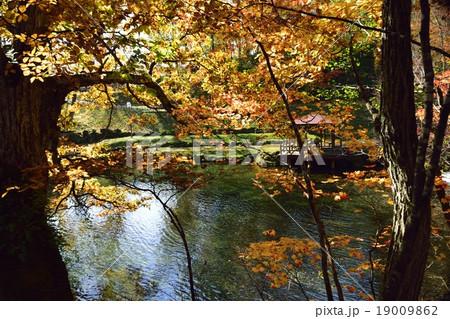 京極ふきだし公園の紅葉 19009862