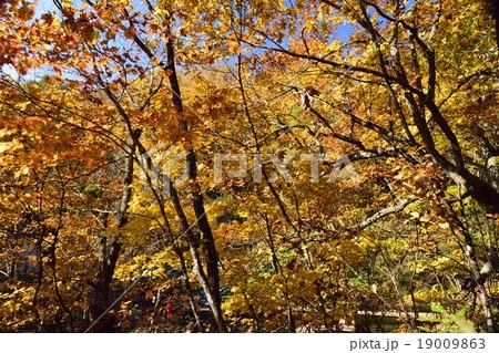 京極ふきだし公園の紅葉 19009863