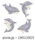イルカ01 19013925