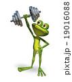 カエル 蛙 緑のイラスト 19016088