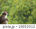 猿 19053312