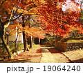 京都の紅葉 19064240