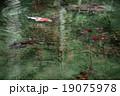 モネの池 根道神社 岐阜県関市 19075978