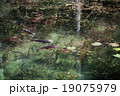 モネの池 根道神社 岐阜県関市 19075979