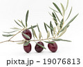 オリーブの枝と果実:Olives with brunches and leaves 19076813
