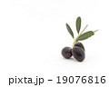 オリーブの枝と果実:Olives with brunches and leaves 19076816