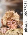 猿 申年 さる 温泉 年賀素材 干支 2016 19077084
