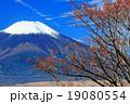 高指山のマユミの実と富士山 19080554