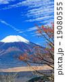 高指山からマユミの実と富士山 19080555