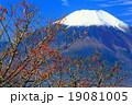 新雪の富士山とマユミの実 19081005