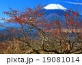 高指山のマユミの実と富士山 19081014
