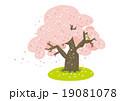 桜 桜の木 花弁のイラスト 19081078
