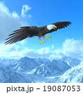 白頭鷲 19087053