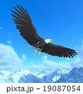 白頭鷲 19087054