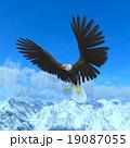 白頭鷲 19087055