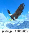 白頭鷲 19087057