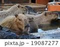 カピバラ温泉 カピバラ 温泉の写真 19087277