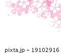 桜イラスト 19102916
