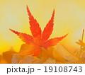 紅葉と銀杏 19108743