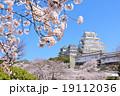 満開の桜に囲まれた春の姫路城 19112036
