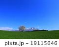 小岩井の一本桜 19115646
