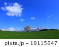 小岩井の一本桜 19115647