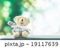 テディ くま クマの写真 19117639