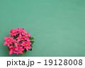 プリンセチア 19128008