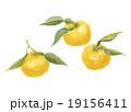 ゆず 柚子 19156411