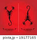 Black Scorpion, Artistic Scorpion 19177165