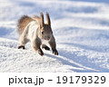 雪原を駆ける 19179329