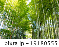 竹林の小径 竹林 修善寺の写真 19180555