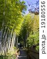 竹林の小径 竹林 修善寺の写真 19180556
