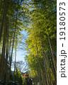 竹林の小径 竹林 修善寺の写真 19180573