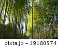 竹林の小径 竹林 修善寺の写真 19180574