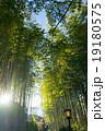 竹林の小径 竹林 修善寺の写真 19180575