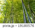 竹林の小径 竹林 修善寺の写真 19180576