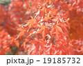 紅葉 19185732