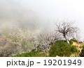 樹木 樹 ツリーの写真 19201949