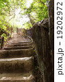 階段 森林 林の写真 19202972