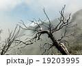 樹木 樹 ツリーの写真 19203995