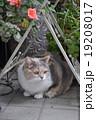 猫とガーデン 19208017