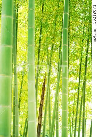 竹 たけのこ 竹林 19213071