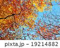 もみじ(根香寺) 19214882